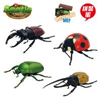 3D立体拼插拼装立体拼图昆虫蛋玩具生物模型