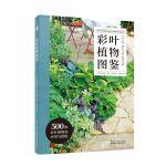 彩叶植物图鉴