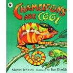 英文原版绘本 Chameleons are Cool 小学STEM 百科科普图画书 Walker Nature Sto