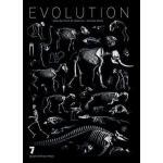 [二手8成新]Evolution /Jean-baptiste De Panafieu Seven Storie
