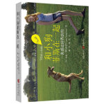 【正版直发】和小狗菲斯在一起(Faith(菲斯)(一条感动全世界的狗!)! Jude Stringfellow 978