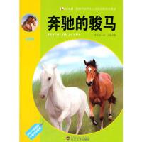 震撼中国学生心灵的动物传奇阅读-奔驰的骏马(彩图版)