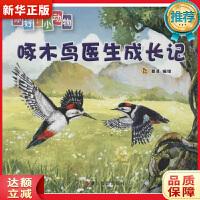 啄木鸟医生成长记(你好!小动物) 登亚 浙江摄影出版社