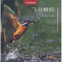 飞羽瞬间:中国野生鸟类精彩图片选 【正版旧书,品质无忧】
