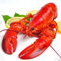 加拿大进口波士顿龙虾波龙鲜活熟冻大龙虾海虾水产品400-450g