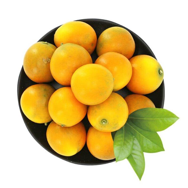 【包邮】融安脆皮金桔 3斤装 单果8-12g脆嫩爽口 甜蜜无酸