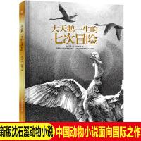 精装沈石溪动物小说 大天鹅一生的七次冒险 6-9周岁儿童动物小说绘本故事书 9-12-14周岁青少年成长励志小说中小学