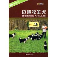 【新书店正版】边境牧羊犬陈晨,宛钺著9787110069813科学普及出版社