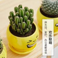 仙人球植物盆栽无刺仙人掌类植物办公室内开花桌面多肉植物