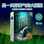 顺丰发货 英文进口原版 The One and Only Ivan 独一无二的伊万 2013纽伯瑞金奖 青少年文学小说