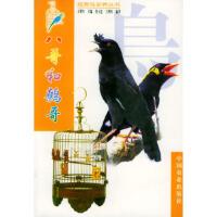 八哥和鹩哥王增年,莫玉忠王增年著9787109061088中国农业出版社