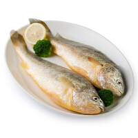 速鲜 新鲜活冻东海野生黄花鱼500g 3-4条海鲜水产海鱼舟山小黄花鱼