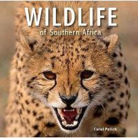 【预订】Wildlife of Southern Africa Y9781770078468