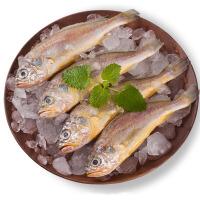 速鲜 新鲜活冻东海野生黄花鱼500g 10-15条海鲜水产海鱼舟山小黄花鱼
