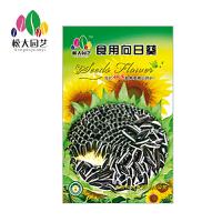 食用向日葵 花种子(大袋)松大园艺四季种花种子盆栽四季种子易