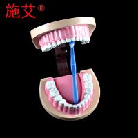 儿童牙列模型牙齿模型附牙刷教学仪器小学生中学生物科学科普卫生器材