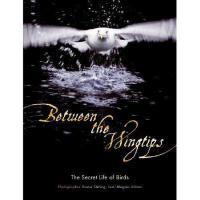 【预订】Between the Wingtips: The Secret Life of Birds