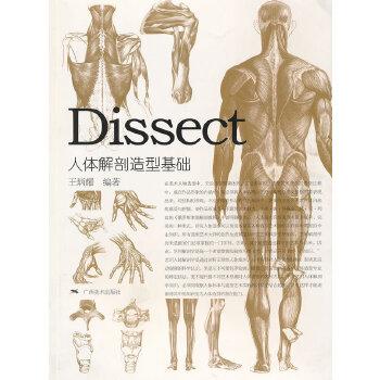 人体解剖造型基础