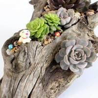 空气植物花盆空气凤梨花盆树根花盆植物盆栽器